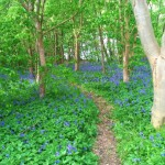Bluebells & Birthday Celebrations