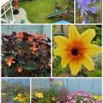 Loving our Garden